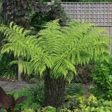 5 great exotic garden plants