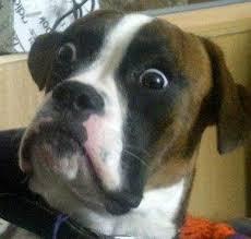 Confused Dog Meme - dumbstruck dog know your meme