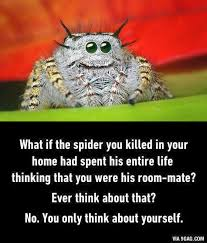Funny Spider Meme - link25 211 the angelic edition spider meme spider and meme
