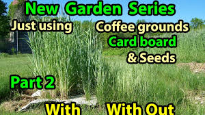 Gardening For Beginners Vegetables by Coffee Grounds Cardboard U0026 Seeds No Till Vegetables Gardening