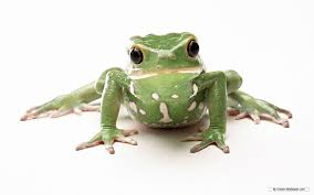 frog pictures kids search
