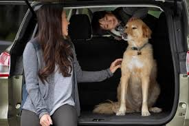 How To Remove Dog Hair From Car Upholstery How To Dog Proof Your Car For Travels With Your Four Legged Friend