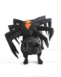 spider dog pet costume spider dog pet costumes and giant spider