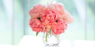 peonies flowers 12 facts about peonies history of the peony flower