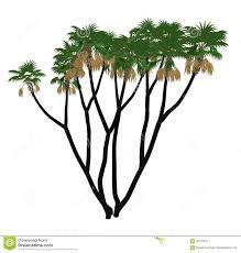 100 render plant plant c4d 260 best ref plant cutouts u0026