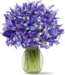 amazon com 30 blue iris with jordan vase fresh cut format iris