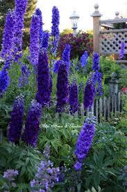 delphinium flowers image result for garden plans with hosta and hydrangea garden