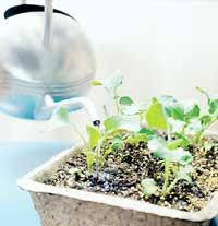 the 25 best gardening calendar ideas on pinterest vegetable