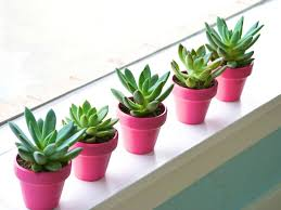 Potted Plants Wedding Centerpieces by Potted Succulent Wedding Centerpieces My Designs Pinterest