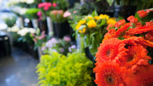 flower places best flower shops in pittsburgh cbs pittsburgh