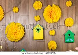 Yellow Pom Pom Flowers - pom stock images royalty free images u0026 vectors shutterstock