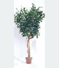 buy now on sale canadian maple silk tree 10 foot custom made on
