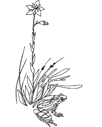 frog grass cute grass coloring pages coloring