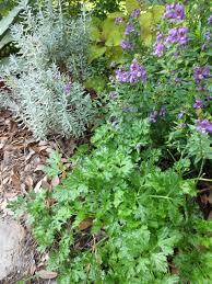tropical texana garden book review the french country garden