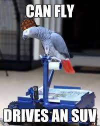 Parrot Meme - scumbag parrot memes quickmeme