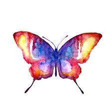 butterfly watercolor stock photo picture and royalty free image