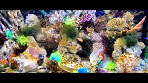 artificial coral reef decoration in saltwater aquarium by aquacci artificial coral reef decoration in saltwater aquarium by aquacci