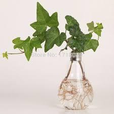 plante verte bureau 6 pcs ensemble soufflé à la en verre oule vase bureau