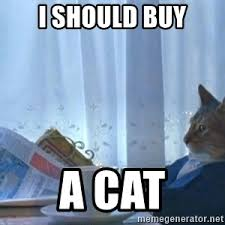 Cat Suit Meme - suit cat meme generator
