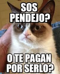 Sos Meme - sos pendejo grumpy cat meme on memegen