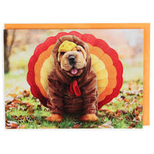 in turkey costume thanksgiving card paperchase