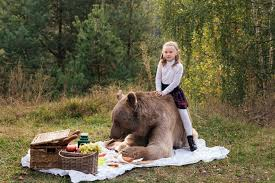 Bear At Picnic Table Meme - random picture thread page 909 ridemonkey forums