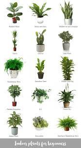 home plants decor marvelous decorative pots for indoor plants photo ideas surripui net