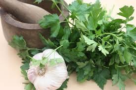 les herbes de cuisine persil ail que sont les herbes aromatiques medisite