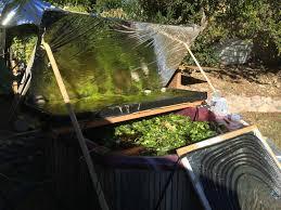 keeping your tilapia happy using solar heat southwest aquaponics