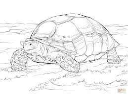 tortoise coloring pages to print coloring home