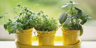 indoor herb garden kits to grow herbs indoors hgtv simple indoor herb garden with adjustable grow light 5 steps simple