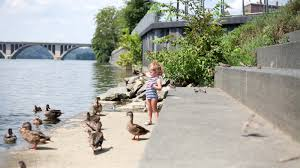 Things To Do In The Ultimate Family Guide Family Friendly Guide To The Georgetown Waterfront Nearest