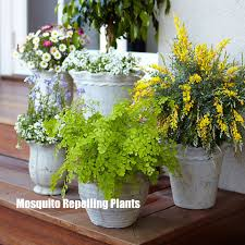 Summer Entertaining Ideas - tips for summer outdoor entertaining mosquito repelling