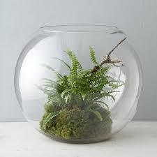 42 best terrain terrariums images on pinterest glass terrarium