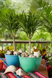 Summer Container Garden Ideas 63 Best Fab And Container Garden Ideas Images On Pinterest
