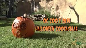 oc zoo halloween zootacular 2014 youtube