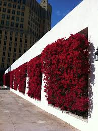 Vertical Gardens Miami - 340 best vertical gardens images on pinterest vertical gardens