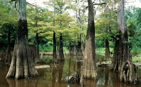 Texas national parks images Best national parks in texas travel leisure jpg