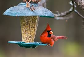 your guide to winter bird feeding new jersey birdseed