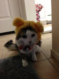 awesomely cute animals halloween edition