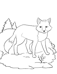 free artic fox coloring kids winter coloring pages