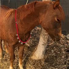 Horse Bridle Decorations Woven Belt Copper Horse Bridle Halter Headstall Horses Decoration