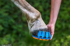running shoes horses clip plastic covers