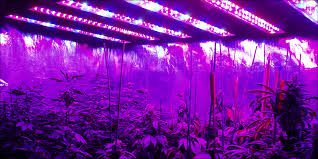 grow room lighting requirements 8 steps to building the perfect indoor grow room