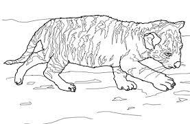 coloriage tigreau coloriages à imprimer gratuits