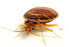 Wisconsin How Do Bed Bugs Travel images Bed bug services and treatments batzner pest control jpg