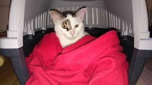 gerüche die katzen nicht mö katzenurin entfernen so bekommst du den gestank restlos weg