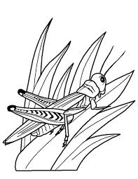 Coloriage insecte   imprimer gratuitement