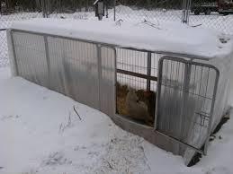 winter greenhouse backyard chickens