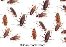 cockroach stock photo images 4 650 cockroach royalty free images